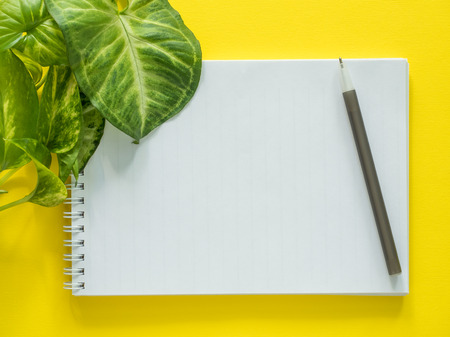 Notepad for notes, green plant leaves on yellow desktop, flat lay, copy space Stock Photo