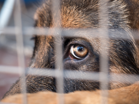 German shepherd sitting locked in a cage. Close up. Selective focus. Stock Photo
