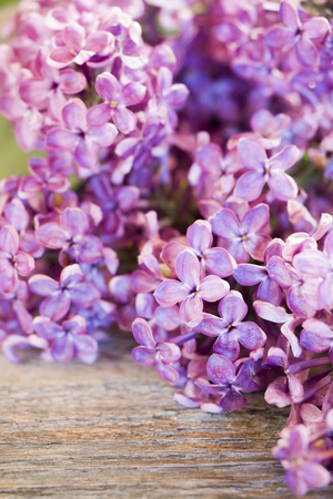 Beautiful lilac flowers on a wooden background copy space