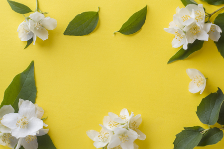 Jasmine flowers on a bright yellow background. Flower frame. Copy space for text