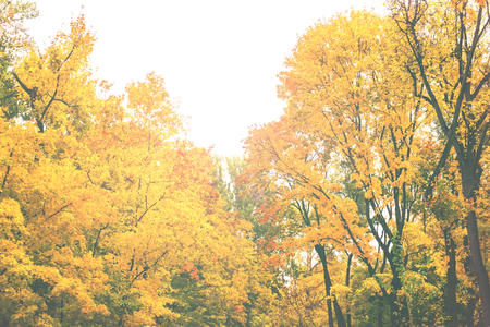 Autumn in the city Park, trees in yellow foliage