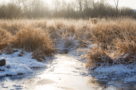 Winter landscape. Frozen river and high dry grass on a Sunny day