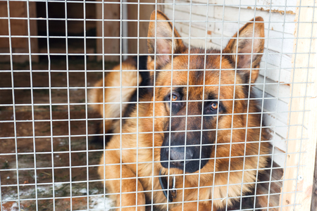 German shepherd dog sits locked in a cage. Reklamní fotografie