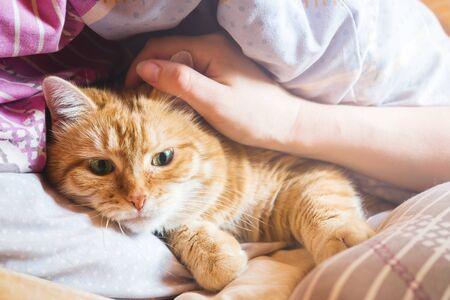 Ginger cat ans sur le lit dans une couverture. maison confortable et concept de détente Banque d'images