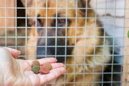 Hand with dog food and a German shepherd in a cage