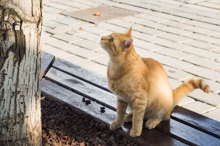 Homeless ginger cat on the street looking at the birds in the tree Фото со стока - 132284825