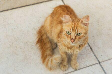 Homeless cute cat on the street sidewalk Фото со стока - 132284830