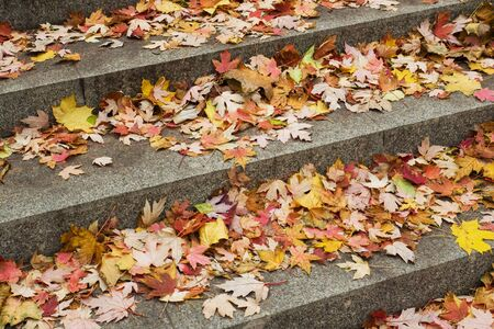 Fallen yellow red maple leaves on concrete steps in the Park