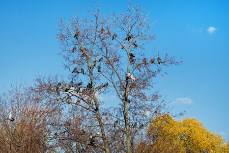 Autumn tree with pigeons. Tree of peace. Autumn landscape