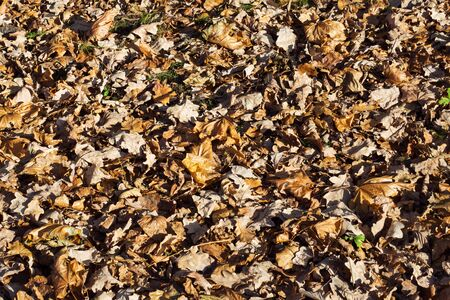 Background texture dry fallen autumn leaves. Close up