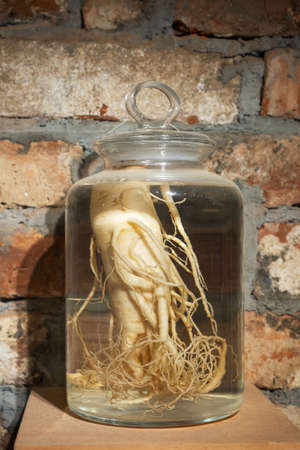 Ginseng root in a glass jar. Medicinal tincture of ginseng root against the background of a brick wall, stored in a dark place