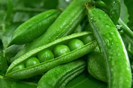 leguminous: Fresh green peas in the pods Stock Photo