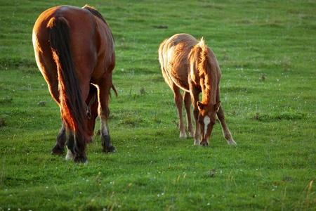 grassy plot: Caballos en el campo, paisaje