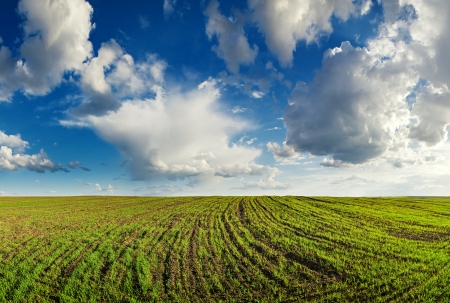 Landscape, cloudy sky above the field with unripe wheal photo