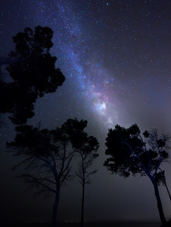 Stars in night sky, trees in dark photo