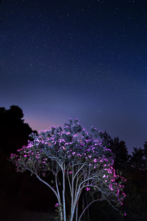 Tree with flowers, sky with stars on background photo