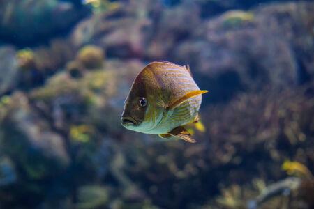 exotic fish: Pescados ex�ticos en el oc�ano