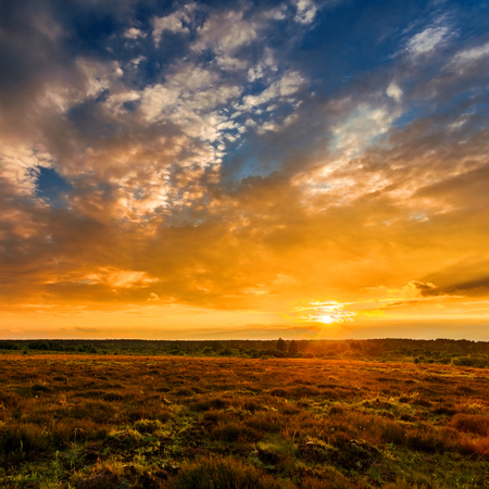 Summer field full of grass and sunset sky above. Beautiful sunset landscape.
