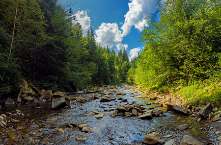 Landscape with mountain river in summer Carpathians. Forest stream in sunny day