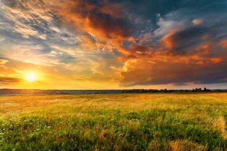 Paisaje al atardecer con un campo de hierba salvaje llano y un bosque en el fondo.