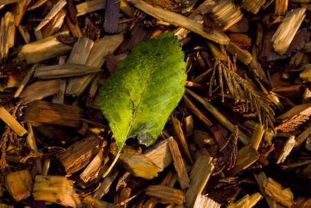 bark mulch: Coloured leaves on bark mulch