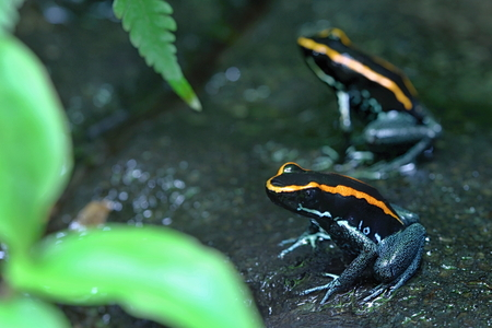 Colourful Frogs in the Wood photo