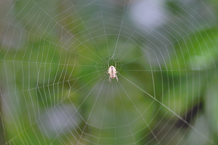 Photo of Spider on the Net in the Garden made in the late Summer time in the Czech republic, 2013 photo