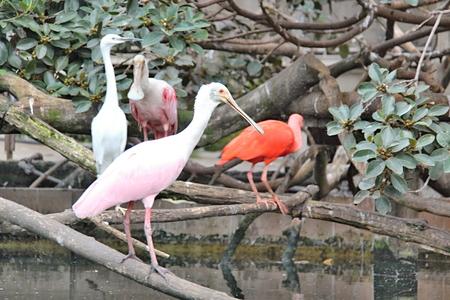aquarium visit: Photo of birds in Oceanographic Parc Stock Photo