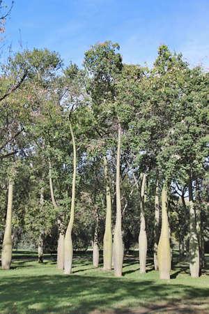 Fleurs espagnols dans les Parcs faites dans le temps de fin d'été en Espagne 2013