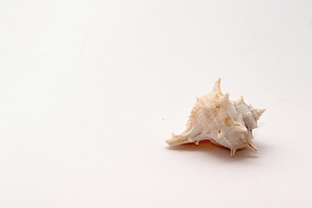 Photo of Seashell Object perfectly fits to various presentation purposes.