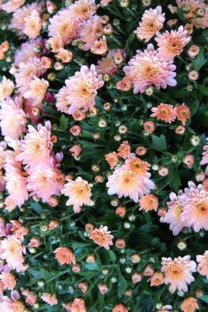 Photo de fleurs espagnols dans les Parcs faite dans l'heure d'été en retard en Espagne 2013