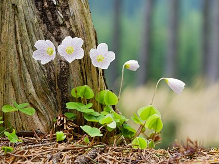 Photo shows details of white flower on the green grass  photo