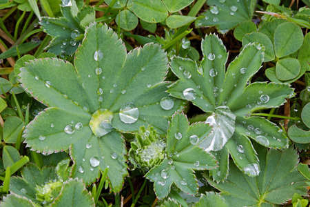 Photo shows details of water drops on the green grass  photo