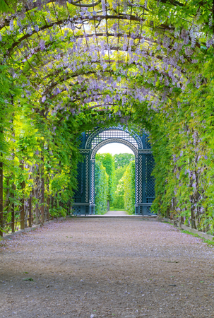 Photo shows general view of garden of Schonbrunn Palace  photo