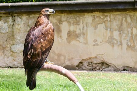 Photo shows details wild eagle bird in the garden. photo