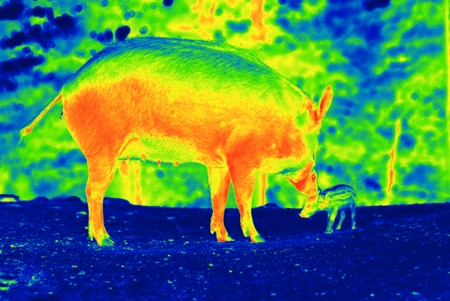 Photo is showing wilds animals captured in the Canadian countryside by a thermal camera. Stock Photo
