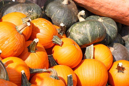Photo shows detail view of various pumpkins in the farmers market. Stock Photo