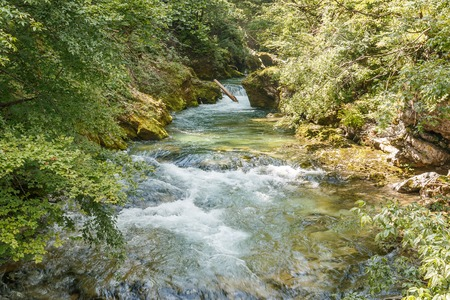 Photo shows close-up of floating river in the middle of forest in summer. Stock Photo