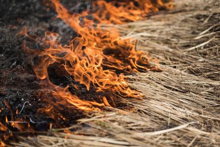Brandend gras in het veld, struiken en planten worden verbrand, land bedekt met donker, vroege lente Stockfoto