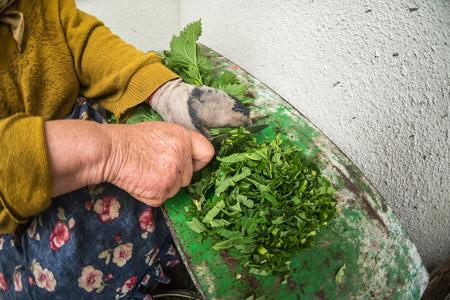 De oude vrouw snijdt brandnetels, bereiding van pluimveevoeder