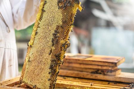 The process of obtaining honey, raising the wax honey from the hive. Ukraine Stock Photo