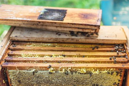 obtaining: Wax frames with honey in the hive, process of obtaining honey. Ukraine Stock Photo