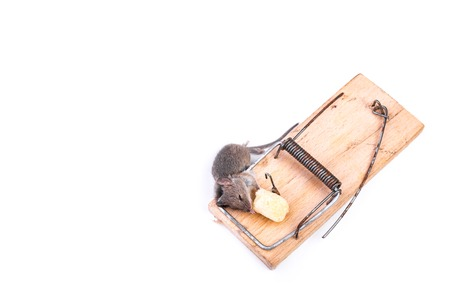 Little mouse got into a mousetrap, white background, place for text