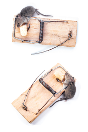 eliminate: Little mouse got into a mousetrap, white background, place for text