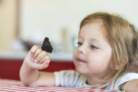 Little girl holds on the hand the Aglais io butterfly and watches for him, observation Stock Photo