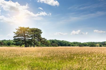 Landscape, Dendrological Park of the National Reserve Askania Nova in Ukraine