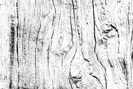 Oak wood texture with texture filled with cracks and knots, design wooden background for overlay, white color