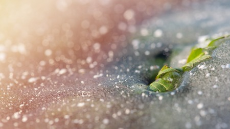 Green leaf breaks through the ice. Concept - insuperable. Winter background Banco de Imagens