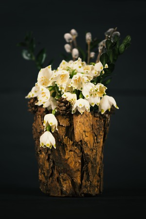 Leucojum vernum in a decorative vase. Is the first spring snowflake. Theme of International Womens Day Stock Photo