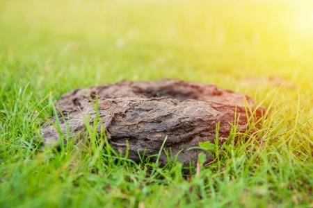 Cow dung on a green grass. Fertilizer for soil